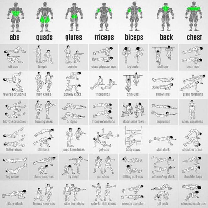 bodyweight chart 1