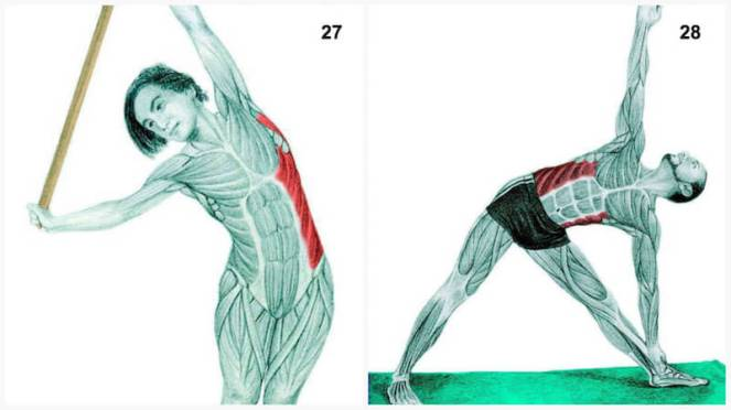 Lateral Flexion with a Dowel and Triangle Pose – Robinson ... Internal Oblique Stretching